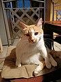Sanka le chat.jpg