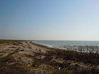 Sasyk Lagoon coast.jpg