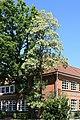 Saterland Scharrel - An der Kirche + Grundschule + Robinia pseudoacacia 02 ies.jpg