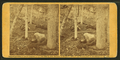 Scene in the woods at Slaughter Pen, by Gardner, Alexander, 1821-1882.png