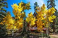 Scenic fall colours along Utah Hwy 14 - (22190407843).jpg