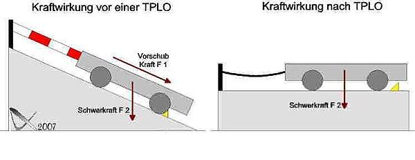 TPLO - Wikiwand