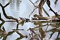 Schildkröten im Wasserpark.jpg