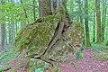 Schleitheim Auenwaldreservat Seldenhalde Bild 4.jpg