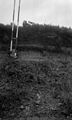 Section at side of raod, Mauley Cross, Yorkshire, 1956. Wellcome M0015987.jpg