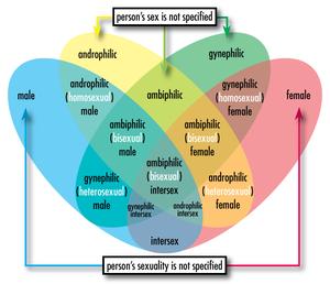 Androphilic heterosexual meaning
