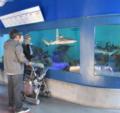 Shark Reef Birch Aquarium.png