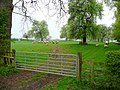 Sheep in the orchard 2 - geograph.org.uk - 1253893.jpg