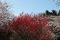 Shinjuku Garden (5652449804).jpg