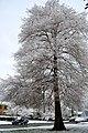 Shreveport snow DSC 0023 (4350648661).jpg
