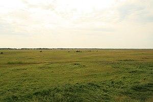 Siberian agriculture - Siberian steppe in Tatarsky, Novosibirskaya Oblast