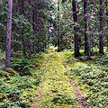 Skogsväg i Junejelgava.jpg