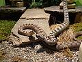 Snakes exposition Doria Museum Genoa 15.JPG