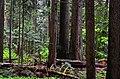 Snoqualmie I - panoramio.jpg