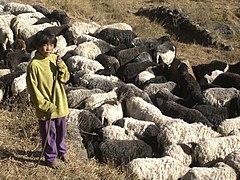Solaban shepherd boy.jpg