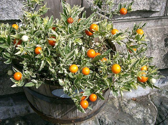 Orange Bedding Uk