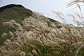 Soni highlands Nara07n4592.jpg