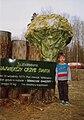 Sparassis crispa--Monument--Szmaciak galezisty--Pomnik-Piotrkowice-Tarnow-Poland--1996.JPG