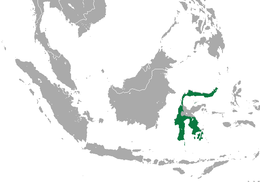 Spectral Tarsier area.png