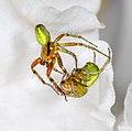 Spider (45295554922).jpg