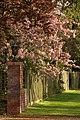 Spring in Epsom (7197757692).jpg