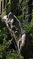 Stamm von Palownia tomentosa.jpg