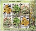 Stamp of Belarus - 2019 - Colnect 873307 - Lichens.jpeg