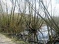 Stanley Marsh Nature Reserve - geograph.org.uk - 1233006.jpg
