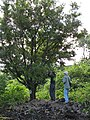 Starr-091104-0702-Diospyros sandwicensis-habit with Kamaui and Forest-Kahanu Gardens NTBG Kaeleku Hana-Maui (24356676304).jpg