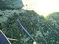 Starr-151005-0942-Aleurites moluccana-aerial view-West Maui-Maui (26190560222).jpg