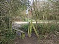 Stile onto the Trail - geograph.org.uk - 312394.jpg