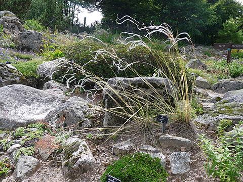 Jardin d 39 altitude du haut chitelet wikiwand - Jardin d altitude du haut chitelet ...
