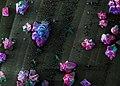 Stone Flower (Кам'яна квітка).jpg