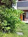 Storkonvall01.jpg