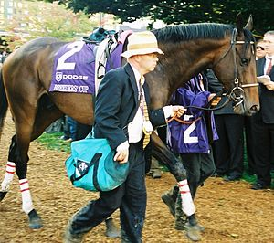Street Sense (horse) - Street Sense in the paddock prior to the 2007 Breeders' Cup