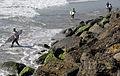 Surf's Up! DVIDS124939.jpg