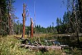 Swamp and Forest, Rogue River-Siskiyou National Forest (36969011821).jpg