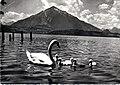 Swan family Niesen.jpg