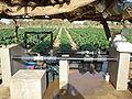 Systéme d'irrigation de goutte à goutte.jpg
