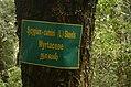 Syzygium cumini Kolli hills JEG3157.jpg