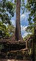 Ta Phrom, Angkor, Camboya, 2013-08-16, DD 18.JPG