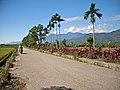 Taiwan 2009 HuaLien Farm Road FRD 6157.jpg