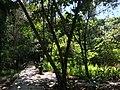 Tangkiling Nature 18.jpg