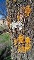 Textures sur un arbre.jpg