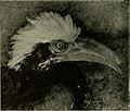 The American Museum journal (c1900-(1918)) (17540164303).jpg