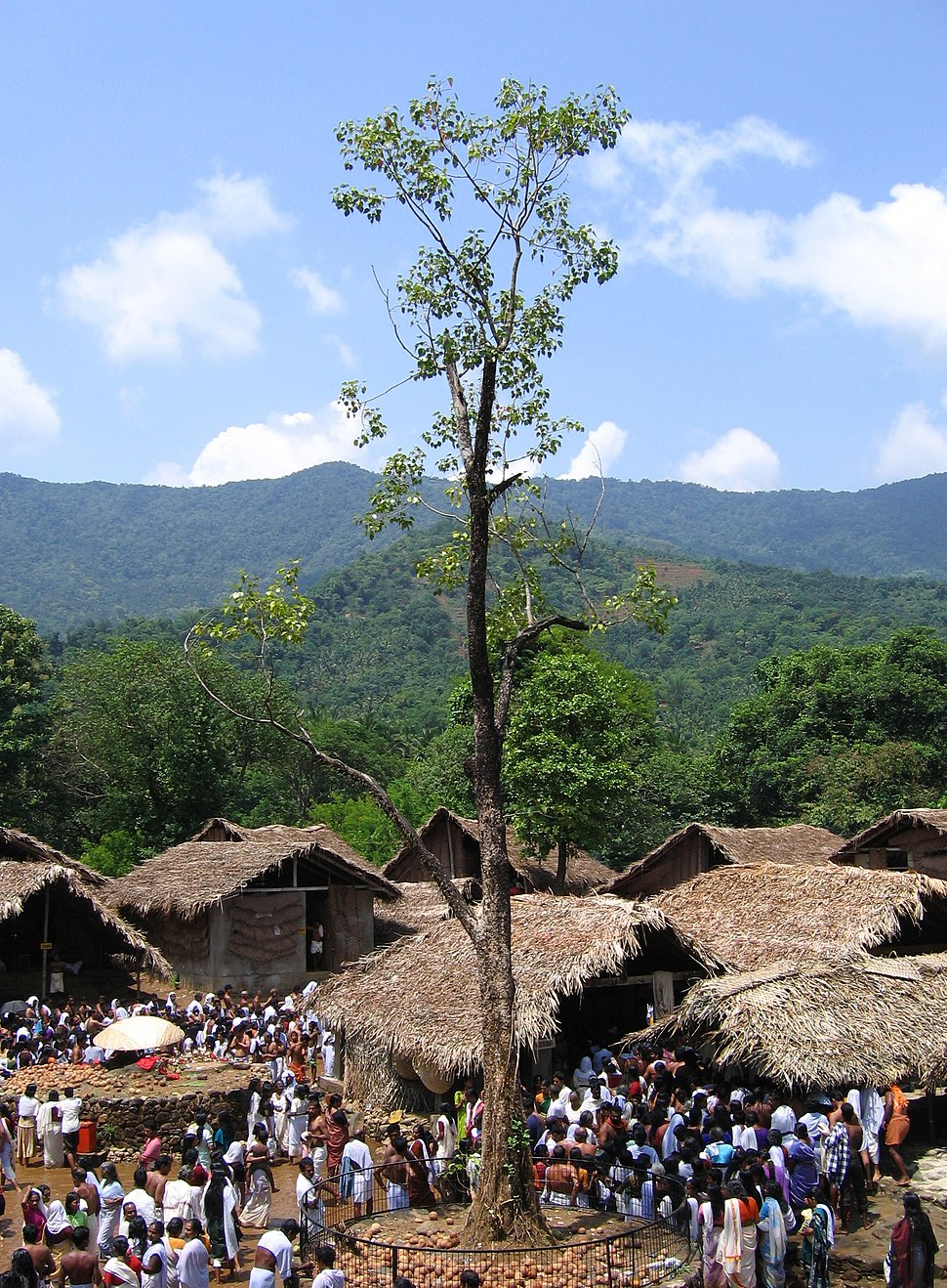 The Banyan tree at Akkare Kottiyoor