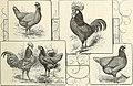 The Farm-poultry (1899) (14760813314).jpg