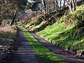 The Millennium Way at Gleid Hill - geograph.org.uk - 358921.jpg