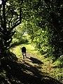 The Northriggs Footpath - geograph.org.uk - 1361447.jpg