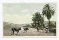 The Old Palms, Mission San Diego, California (NYPL b12647398-75555).tiff